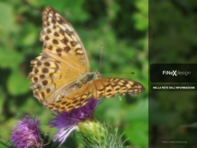 FiNeX Butterfly